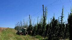 Germany Bavaria Hops field Stock Footage