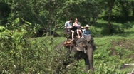 Stock Video Footage of Riding elephants