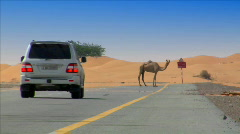 camel on desert street heat haze - stock footage