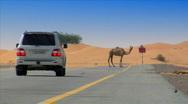 Camel on desert street heat haze Stock Footage