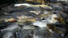 The fish farm Stock Footage