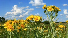 Natural flowers in field Stock Footage