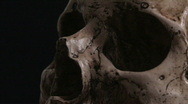Human Skull CU Zoom Out 1 Stock Footage