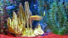 Aquarium fish swimming Stock Footage