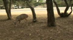 Deer family medium Stock Footage