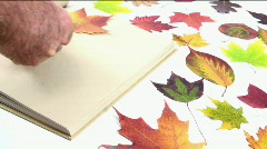 Scrapbook Of Leaves Stock Footage