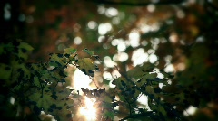 Sun Light Through Leaves  - stock footage