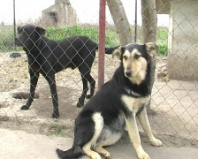 Dogs in shelter Stock Footage