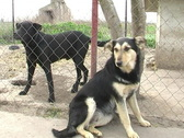 Stock Video Footage of Dogs in shelter