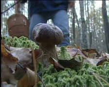 Mushroom picker Stock Footage