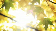 Stock Video Footage of Sunny fall leaves