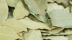 Bay Leaves Stock Footage