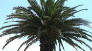 Stock Video Footage of Close up Palmtree