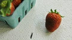 Strawberry slug Stock Footage