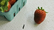 Strawberry slug Stock Footage