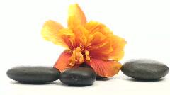 Zen rocks and hibiscus loop V2 - HD - stock footage