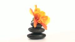 Zen rocks and hibiscus zoom V1 - HD - stock footage