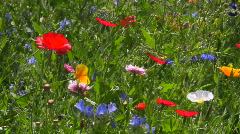 Flower meadow Stock Footage