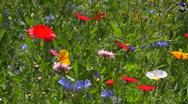 Stock Video Footage of Flower meadow