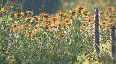 caucasus, plant - stock footage