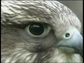 A bird-close up Stock Footage