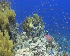 Colourful tropical reef - stock footage