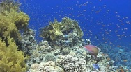 Stock Video Footage of Colourful tropical reef to divers enjoying a dive 090407