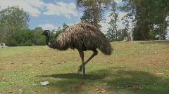 Emu 4 Stock Footage