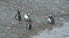 Penguins standing on the beach Stock Footage