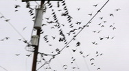 Pigeons on a wire Stock Footage
