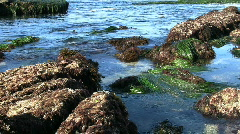 California Tide Pools - stock footage