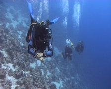 Passing shot of scuba divers - stock footage