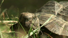 Stock Video Footage of Large tortoise macro 2