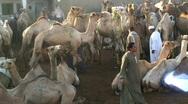 Camel Fair, Birqash, Cairo Stock Footage