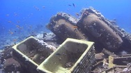 Stock Video Footage of The Cargo and wreckage of a shipwreck encrusted with corals Yolanda 090406