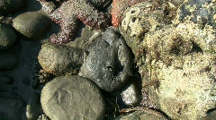 Sea Hare Found Near Tide Pool Stock Footage