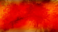 Fall trees Looping Background Stock Footage