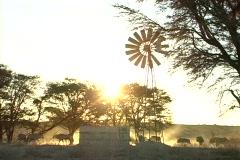 Kalahari water hole at sunset NTSC Stock Footage