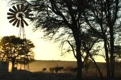 Gnus at Kalahari water hole 2 NTSC Stock Footage