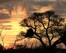 Kalahari sunrise PAL Stock Footage