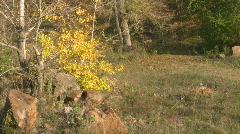 Mellow autumn III. Stock Footage