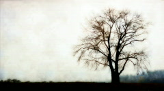 Tree in fog Stock Footage