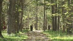 Dirt Path between trees zoom Stock Footage
