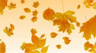 Stock Video Footage of Falling Leaves