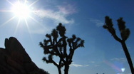 Stock Video Footage of Joshua Tree HS 01 Time Lapse 23x