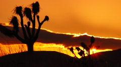 Joshua Tree HS 05 Sunset Loop 01 - stock footage