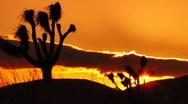 Joshua Tree HS 05 Sunset Loop 01 Stock Footage