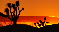 Joshua Tree HS 06 Sunset Loop 02 Footage
