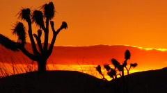 Joshua Tree HS 06 Sunset Loop 02 - stock footage