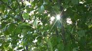 Sunlight Stock Footage